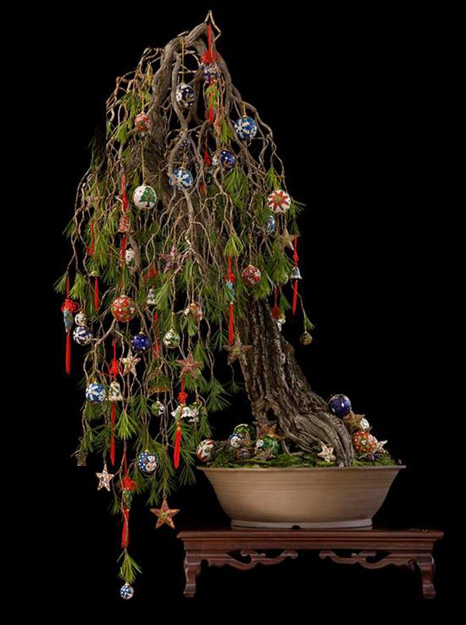 bonsaichristmastree