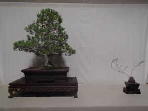 21st Century Award - Tom Voung - Black Pine