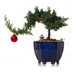 holiday-bonsai