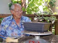 Santa Anita Bonsai Society A Community Dedicated To The Study And Appreciation Of The Ancient Art Of Bonsai Page 3